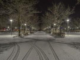 Stadtbäume am Strassenrand können im Winter unter dem Streusalz leiden.