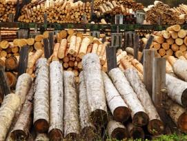 rundholz in einer sägerei