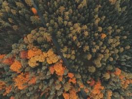 Bäume Wald Herbst