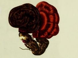 Lacksporling (Symbolbild)