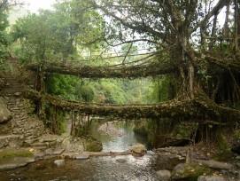 Lebende Brücke.