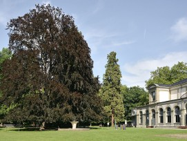 Kurpark in Baden.