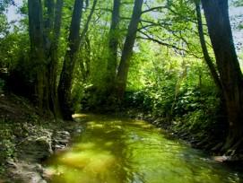 Am Gewässerschutzgesetz scheiden sich die Geister: Bauern sind dagegen, Umweltschützer dafür. (Bild: Marianne J./pixelio.de)