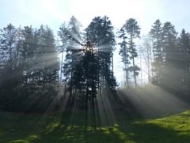 In Regionen mit zunehmender Waldfläche muss bei Rodungen nicht mehr zwangsläufig aufgeforstet werden. (Bild: Daniel Stricker/pixelio.de)