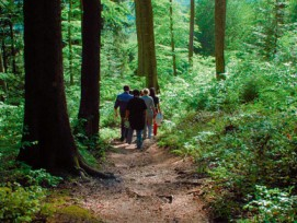 Verantwortungsvoller Umgang mit dem Wald