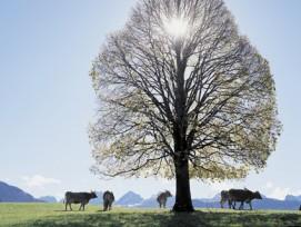 Noch stehen der Sonnenenergie viele Hindernisse im Weg, doch in der Energieregion Toggenburg werden erneuerbare Energien aktiv gefördert.