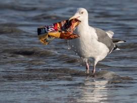 Möwe mit Plastikabfall