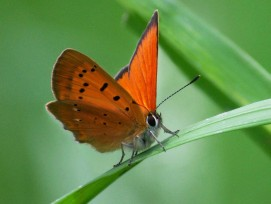 Schmetterling (Symbolbild)