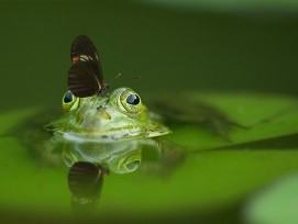 Frosch und Schmetterling im Teich