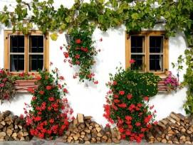 Hausfassade mit Efeu