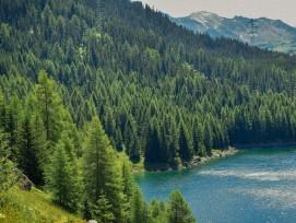 Wald in der Schweiz
