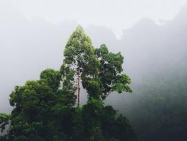 Baum im Dschungel in Thailand.