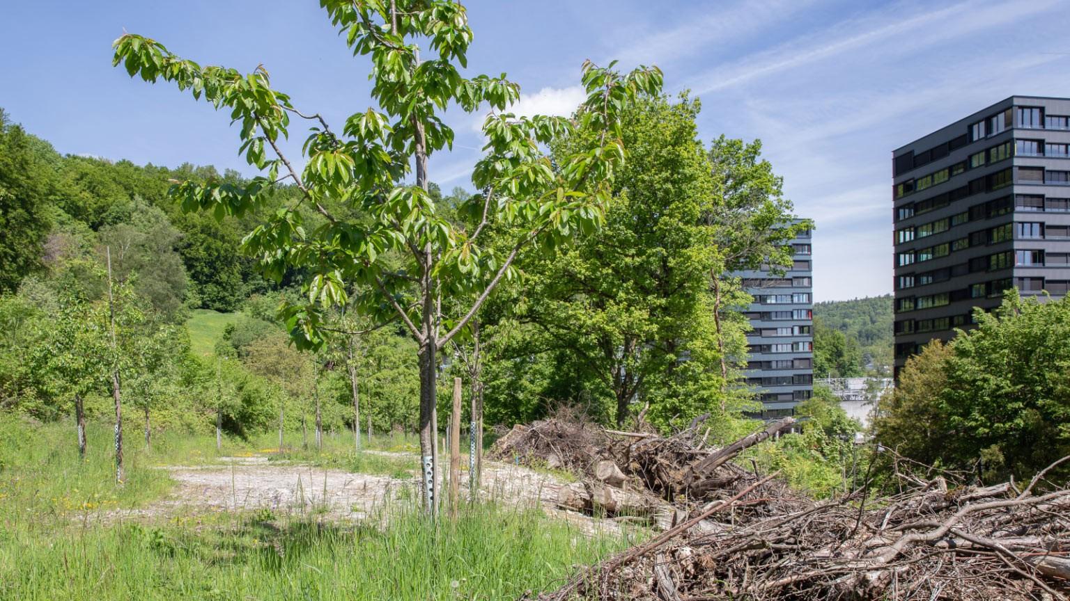ehemaligen Parkplatz der ABB beim Martinsberg in Baden