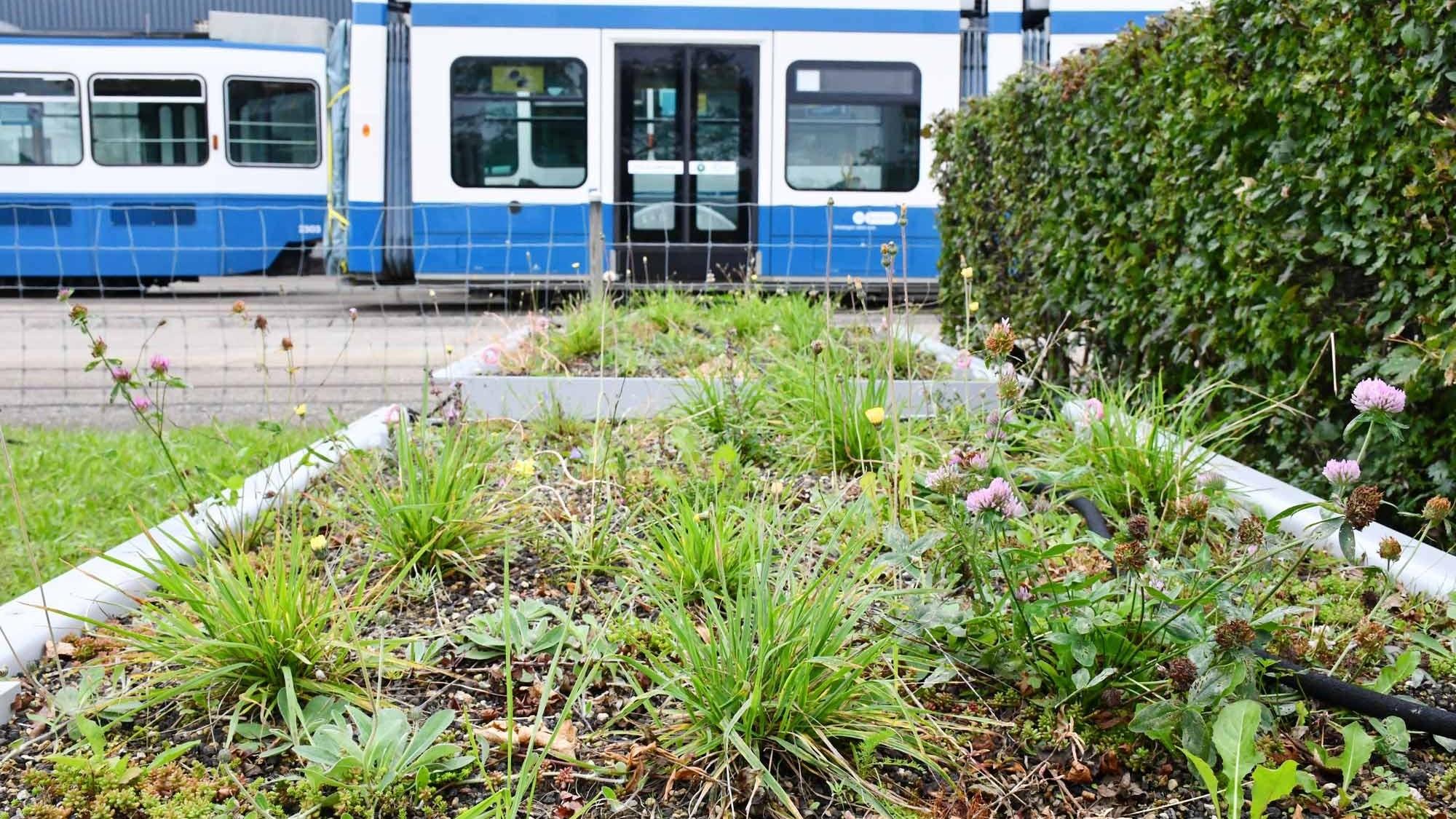 Pflanzentröge für VBZ-Tramhaltestellen in Zürich