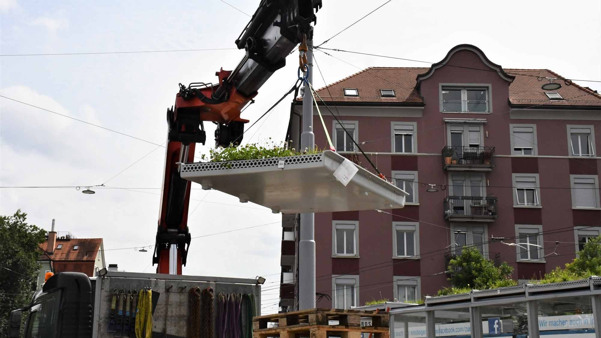 Bepflanzung von VBZ-Tramhaltestelle in Zürich