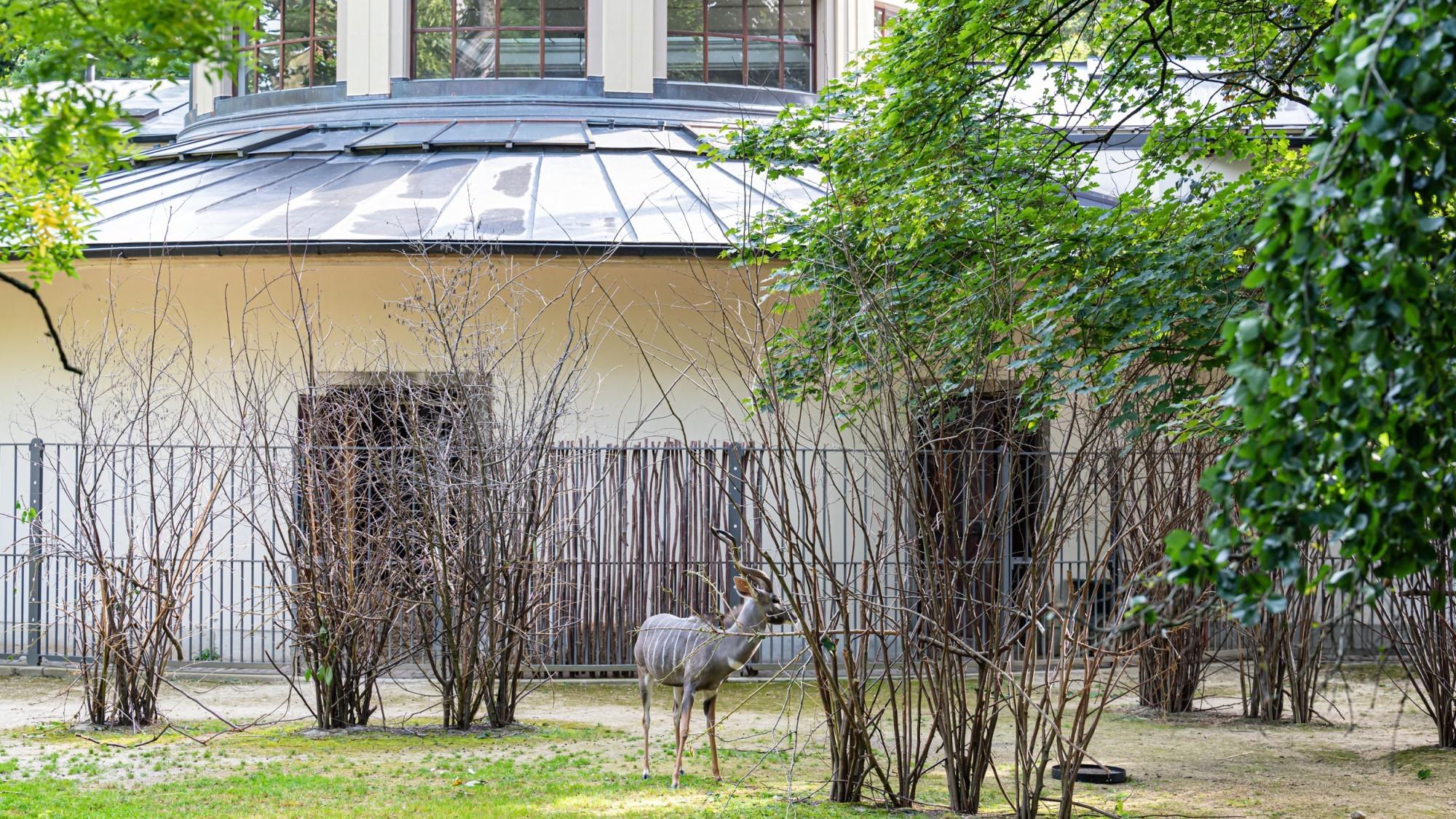 Antilopenhaus Aussenanlage